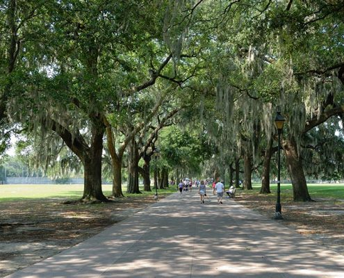 Live Oak on the list of Best Shade Trees