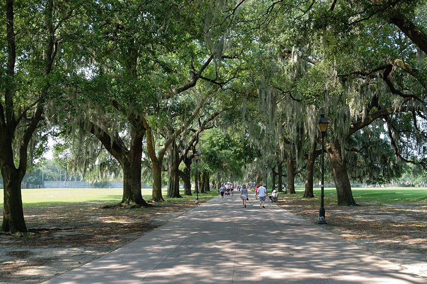 Best Shade Trees | Choosing the Best Shade Trees for Your Yard