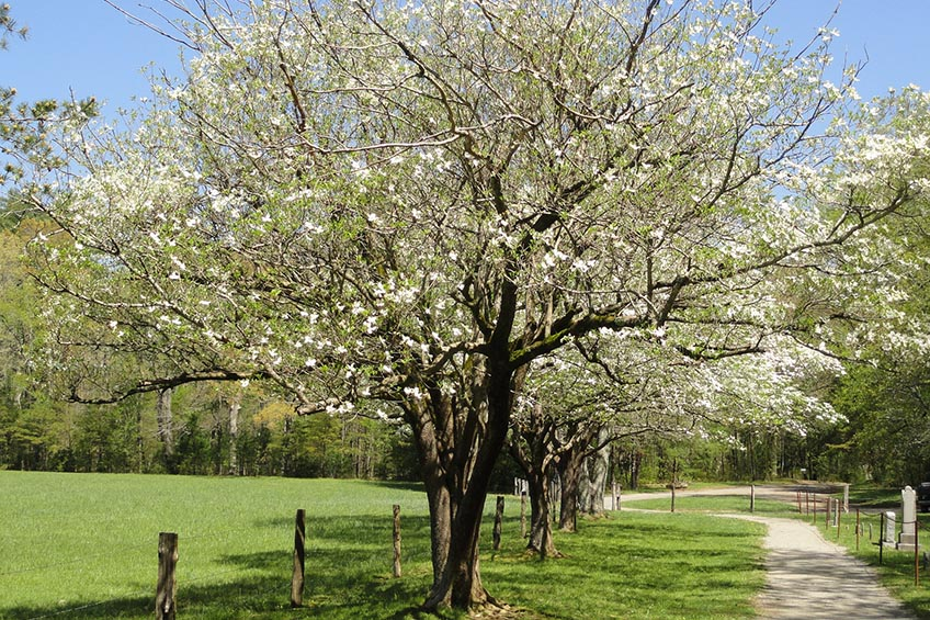 Best Shade Trees   Choosing the Best Shade Trees for Your Yard