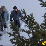 Chopping Down Christmas Trees