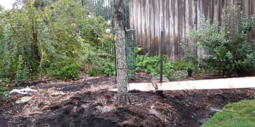 removing metal tree stakes