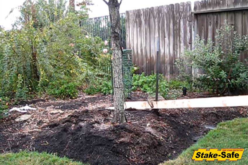 Removing Metal Tree Stakes   A Quick Trick for Pulling up