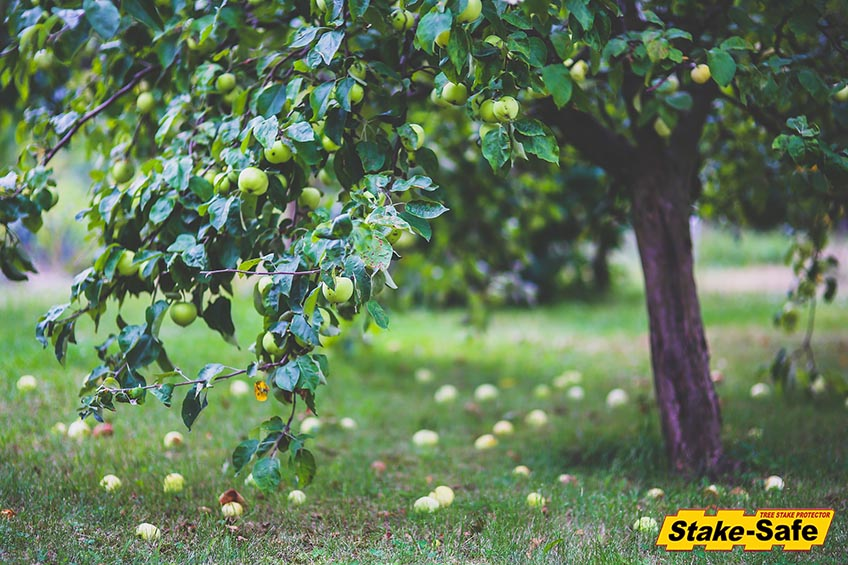 Fruit Trees That Thrive In Planting Zones 3 Amp 4 And Bear Fruit