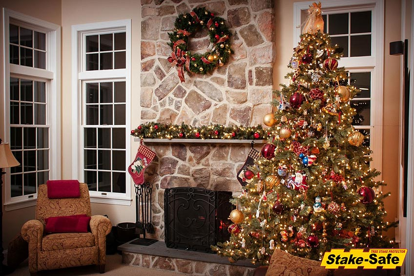Most Popular Trees To Decorate